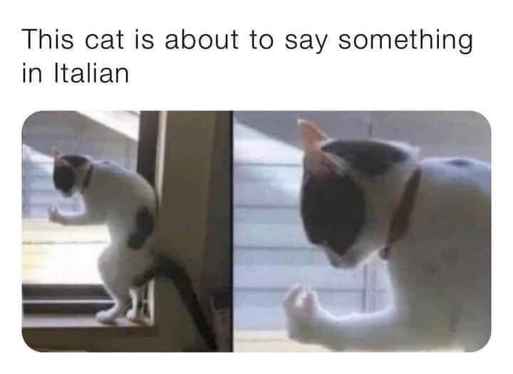 This cat is about to say something in Italian