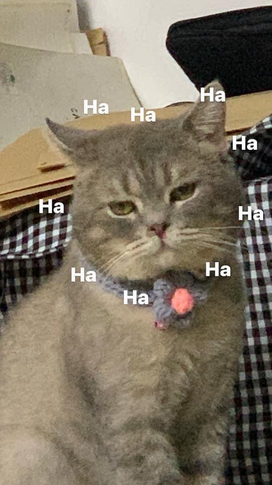 Cat with straight face ha ha ha haha meme