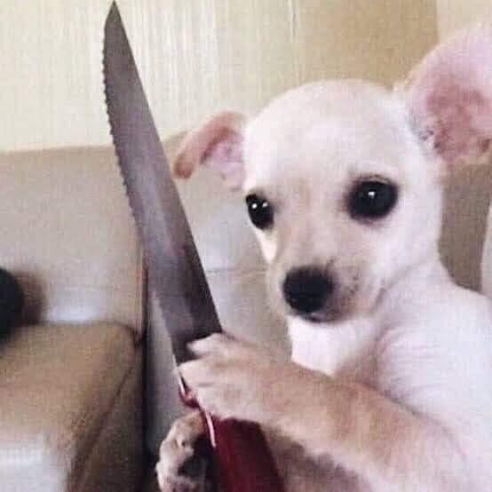 White chihuahua dog holding a knife meme